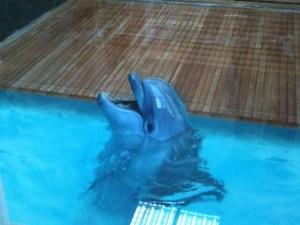 Декоративные наливные 3D полы с изображением дельфина