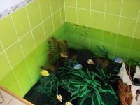 С водорослями
